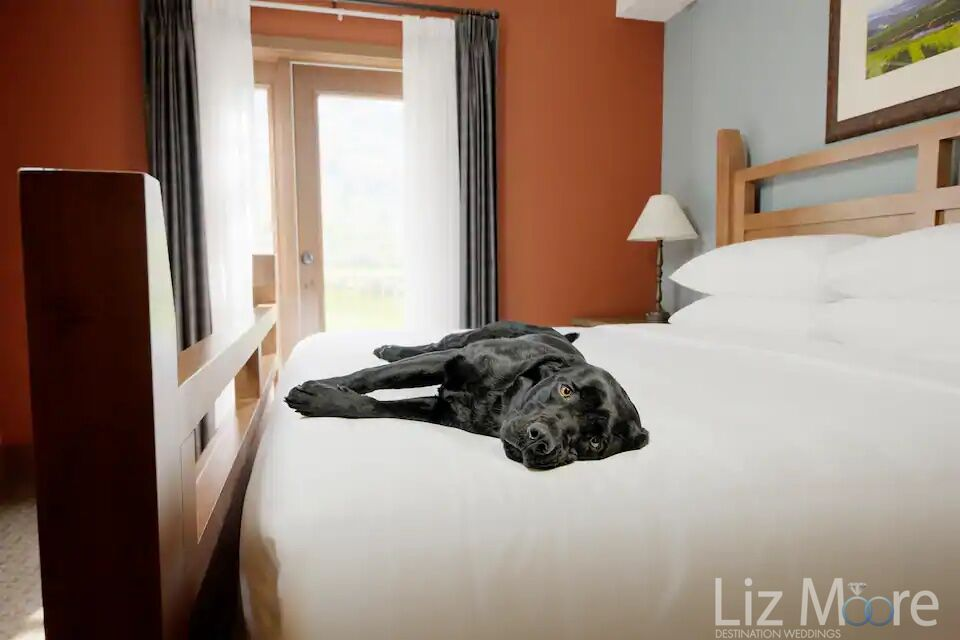 Dog laying on the bed in the pet friendly suites
